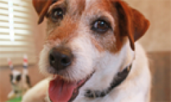 Uggie Artist head
